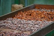 Cocoa Beans Sweating