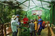 Coffee Growing Cycle Costa Rica