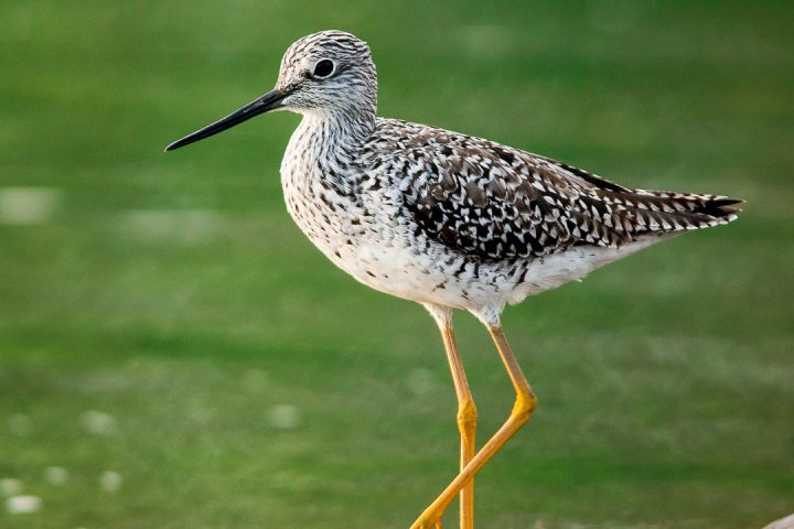 Birds Damas Island