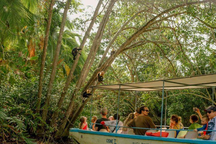 Monkeys Mangrove Boat Tour