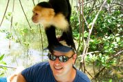 Monkeys Playing Damas Island