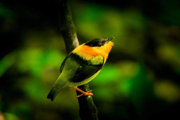 Rainmaker Park Birdlife
