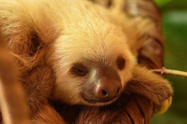Sloth Jaguar Rescue Center